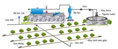 Cách tưới nước cho rau trồng tại nhà - tuoi nho giot s