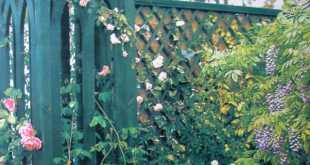 Hàng rào vườn