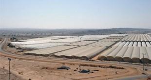 nông trang trên sa mạc