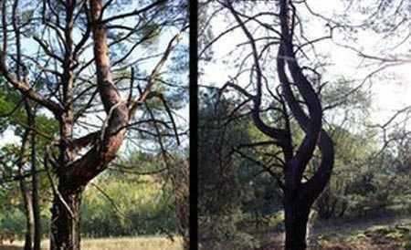 cây cối