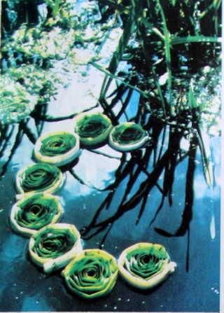 nước trong trang trí sân vườn