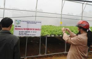 Vườn xà lách thuỷ canh ở Thánh Mẫu đạt lãi 1 triệu đồng/100m2/45 ngày