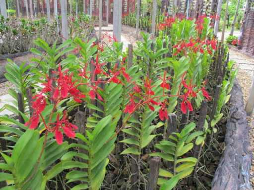 Lối di trong vườn lan - Thái Lan