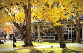 Sắc thu vàng của hàng cây bạch quả-Ảnh: blogspot