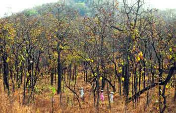 Chỉ cần một cơn mưa ghé qua, cả khu rừng sẽ bừng lên chồi xanh ngút ngàn