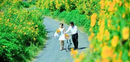 Những con đường hoa dã quỳ đã góp phần làm nên một Đà Lạt mộng mơ. Ảnh: dulichvietnam