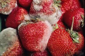 trái câybị nấm mốc rất có hại cho sức khỏe