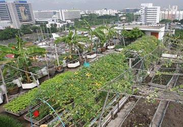 Vườn rau trên sân thượng tòa nhà văn phòng quận Laksi (Bangkok, Thái Lan). Ảnh: funzug.com