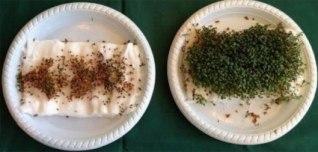 Ảnh thực tế kết quả thí nghiệm: bên trái là những hạt giống đặt gần thiết bị phát sóng Wi-Fi, bên phải là những hạt giống đặt trong căn phòng cách xa thiết bị phát sóng Wi-Fi. Tất cả đều được chăm sóc với chế độ như nhau