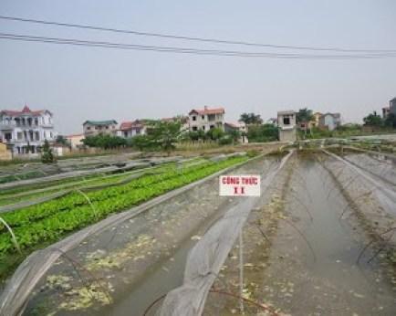 Ngâm nước đất trồng là biên pháp đơn giản nhất hạn chế sâu bệnh