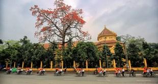 Những ngày này, trên một vài tuyến phố của Thủ đô được phủ một màu đỏ rực của hoa gạo.