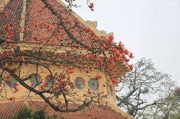 Hoa khoe sắc bên mái nhà cổ kính.