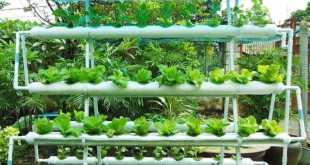 """""""Vườn rau"""" không cần đất không tốn nhiều diện tích."""