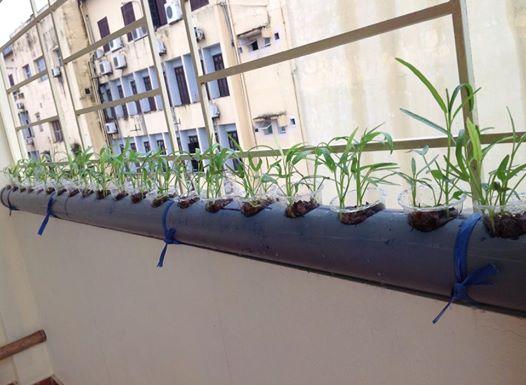 Cách trồng rau không cần đất - cach trong rau khong can dat2