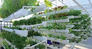 Mô hình trồng rau sạch trên giá thể