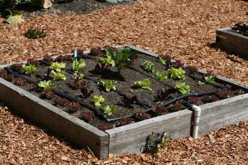 Hệ thống nước tý hon cho những khu đất nhỏ xinh. Hệ thống này có thể khá thuận tiện cho khu vườn nhỏ của bạn và giảm thiểu bớt công sức của người trồng nhưng chi phí đầu tư thì không hề nhỏ chút nào.
