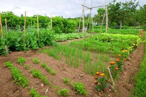 Một ví dụ điển hình cho những khu vườn rau rộng lớn. Nếu bạn có đủ điều kiện về diện tích, bạn không cần đến những khung rau bằng gỗ cồng kềnh nữa!