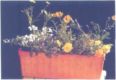 Trồng nhiều loại hoa theo hình chữ z để tạo cảm giác đa chiều.
