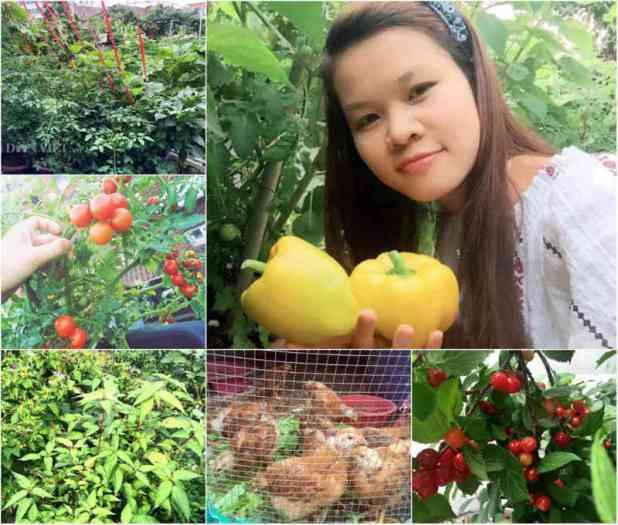 Dù bận rộn nhưng muốn có nguồn thực phẩm sạch cho gia đình, chị Hà vẫn cố gắng tranh thủ thời gian để làm vườn, xới đất, trồng rau.