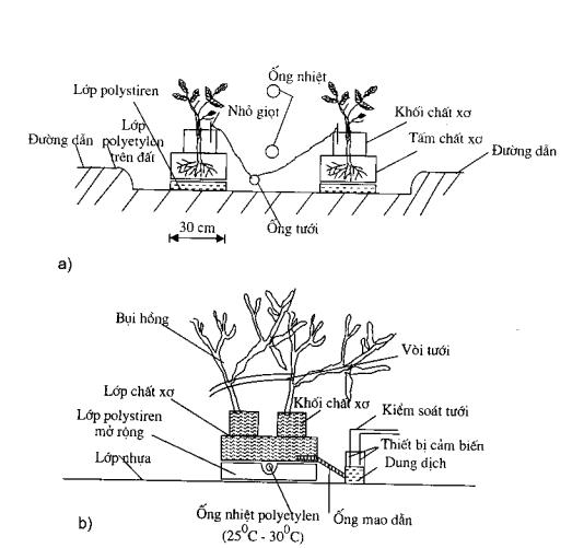 Hình 2.7. Môi trường cây phát triển a) một cây trồng trong hệ thống chất xơ; b) hai cây trồng trong hệ thống tưới