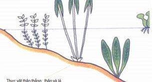 Khái niệm về cây thủy sinh