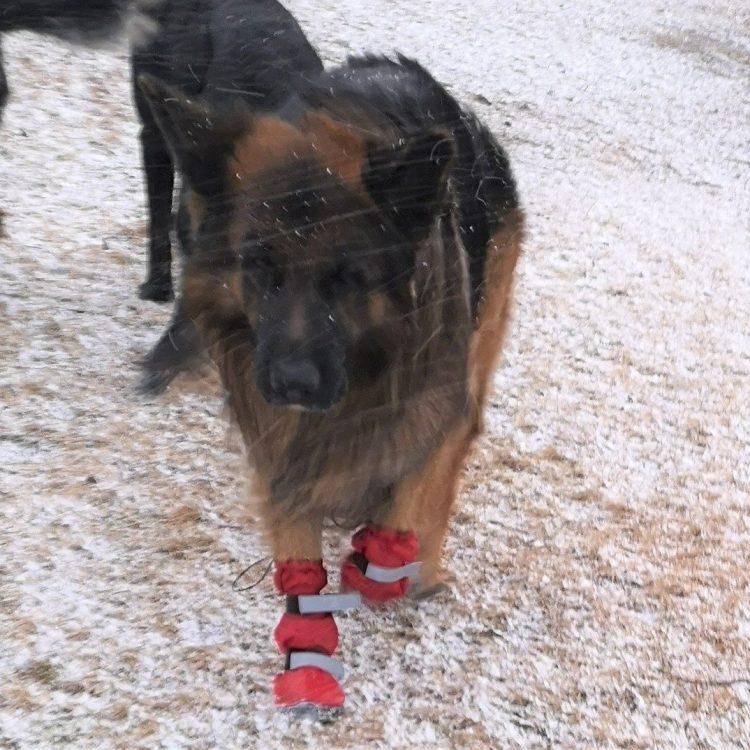 Leggstøvler hund vanntett med gummisåle
