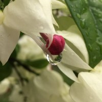 Bleeding Heart/photography/poetry