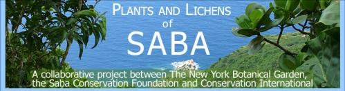 Saba_Banner