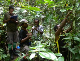 Field research team mapping 300,000 individual plants in the Forest Dynamics plot in the proposed Wanang Conservation Area, an important part of Papua New Guinea research infrastructure.