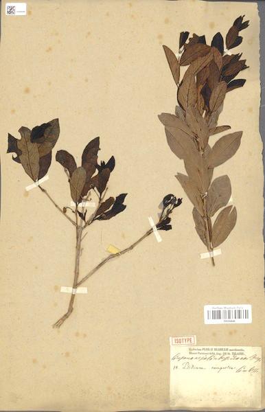 Brazilian Herbarium