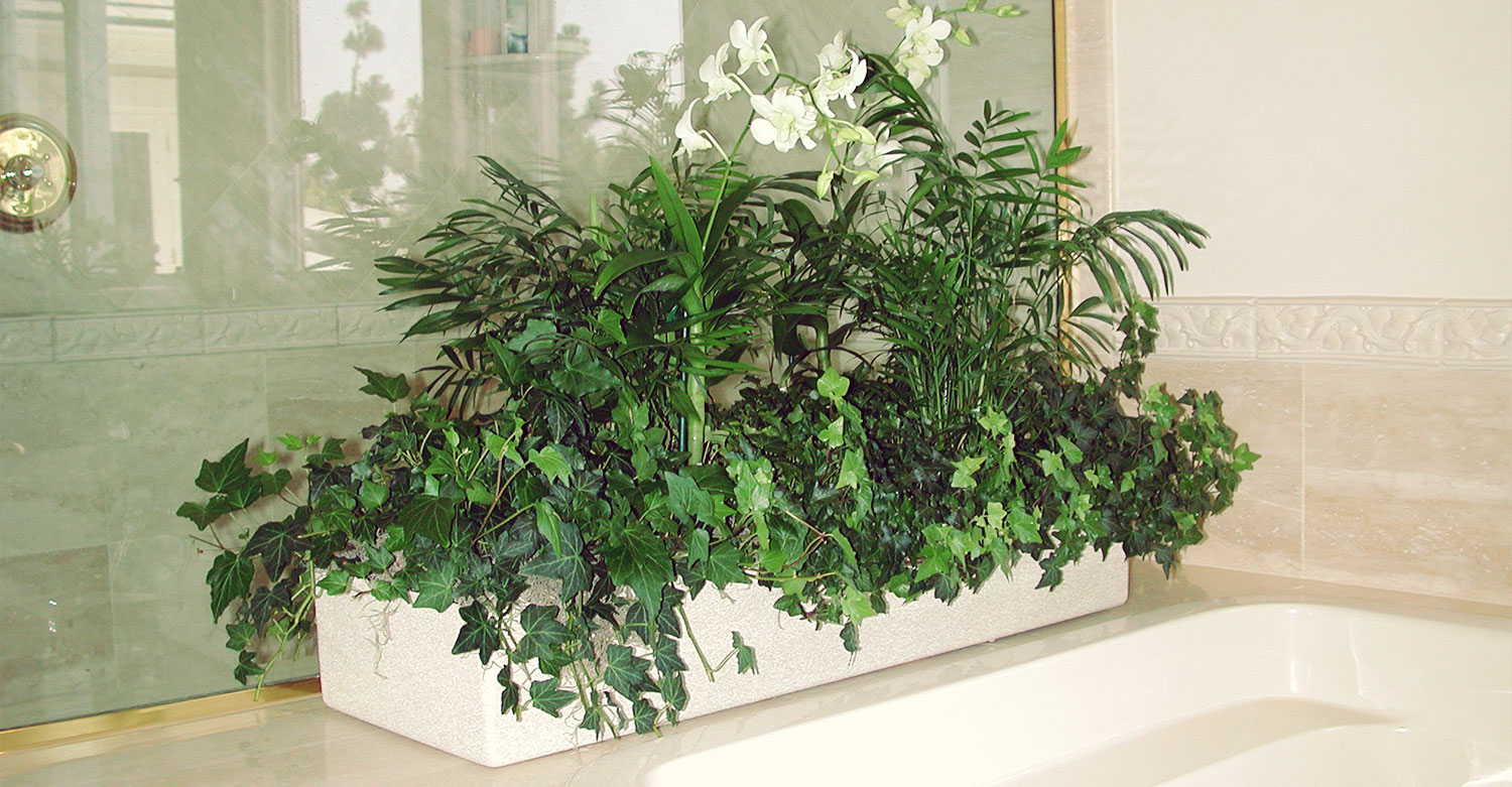 Interior Plant Design Sherman Oaks landscape contractors We replace flowering plants and provide new foliage in case a plant looses  it s attractive appearance