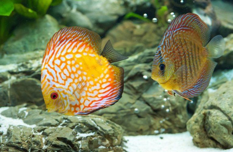 Jak regulować pH wody w akwarium