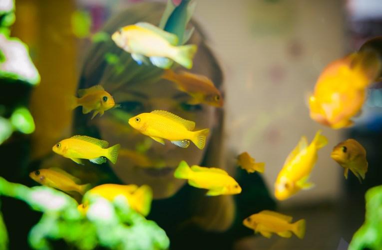 Jak wybrać pokarm dla ryb akwariowych?