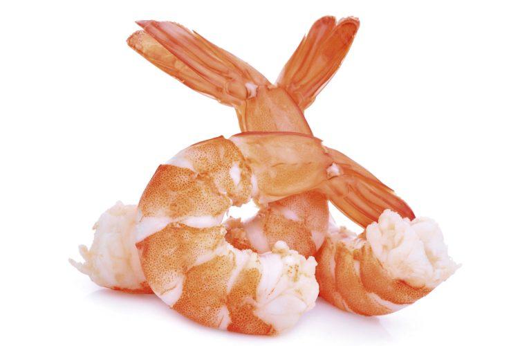 Bezkręgowce w diecie ryb akwariowych