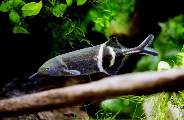 Komunikacja dźwiękowa ryb