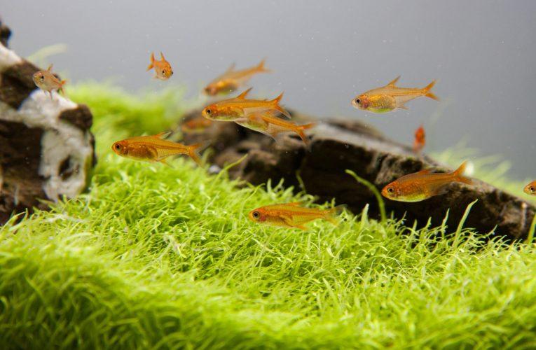 Jak działa filtracja biologiczna w akwarium?
