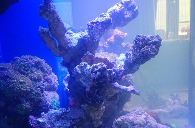 Sztuczna skała w akwarium morskim – wady i zalety