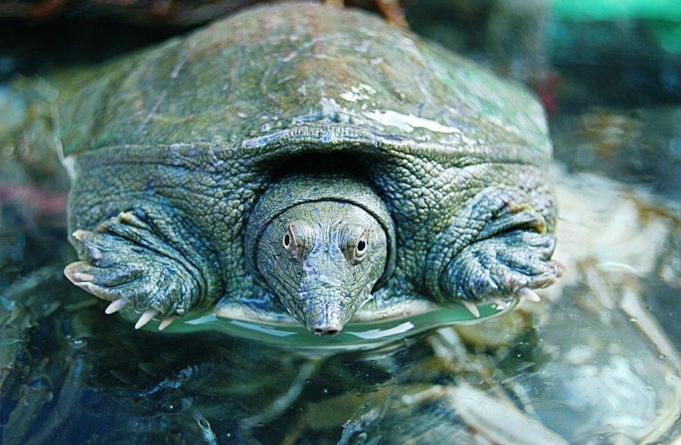 Jakie akwaterrarium dla żółwi wodno-lądowych?