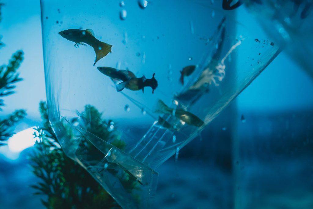 Jak kupować ryby akwariowe. Ryby wworku.