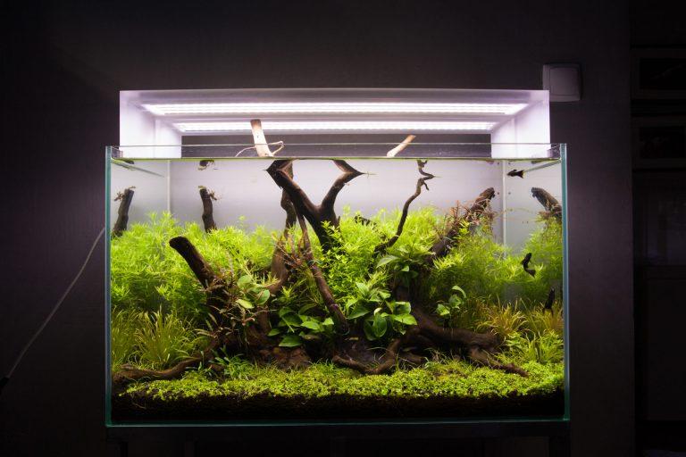 Akwarium zoświetleniem LED