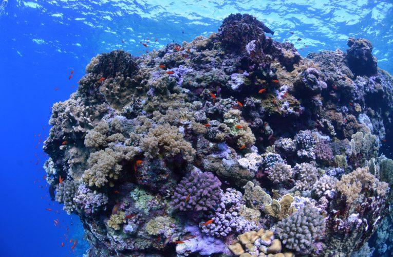 Jak na karmienie korali wpływa filtracja w akwarium?