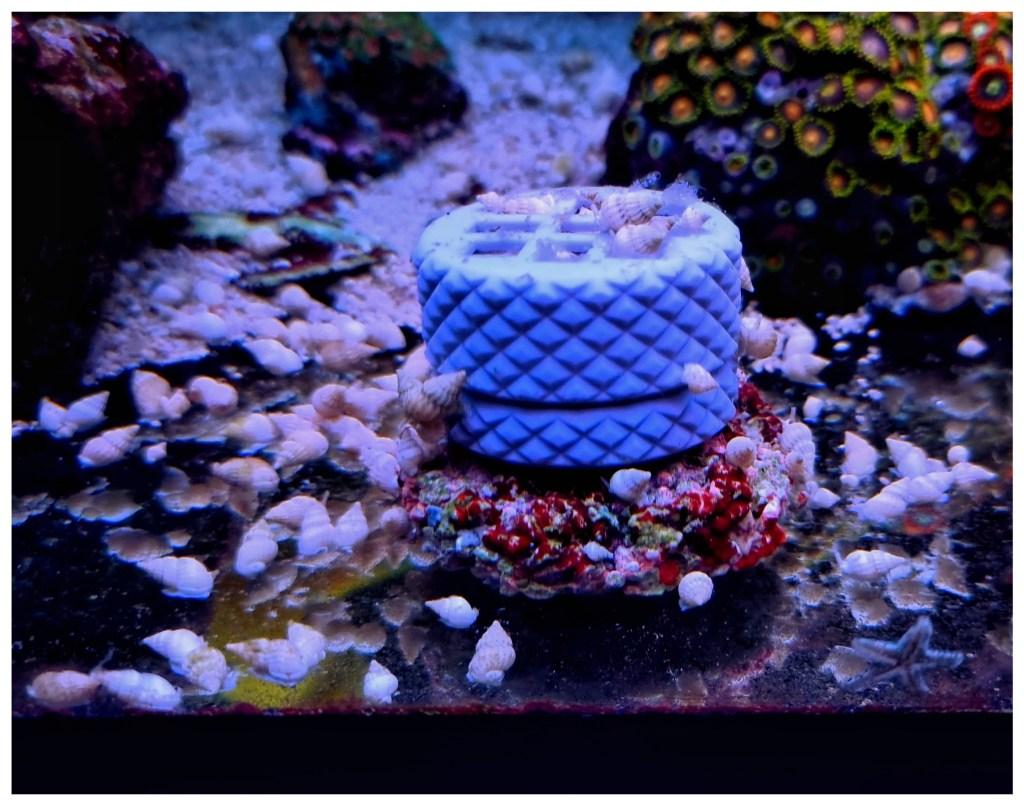 ślimaki wakwarium morskim