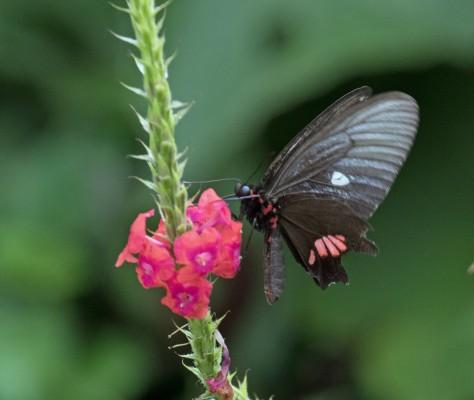 bees honey butterflies pollinators