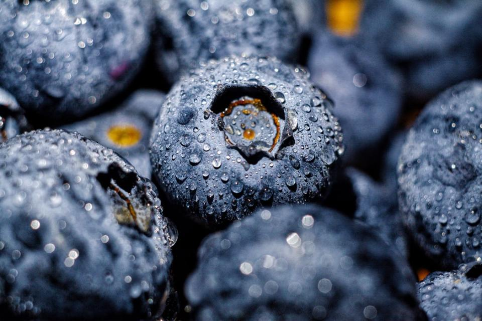 A SELECTION OF CLOSE UP JUICY, PLUMP BLUEBERRIES WITH WATER DROPLETS ON THEM