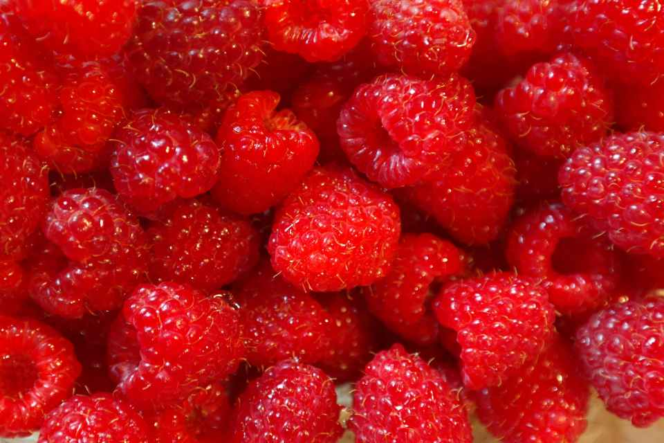 CLOSE UP FULL FRAME OF BRIGHT RED RASPBERRIES
