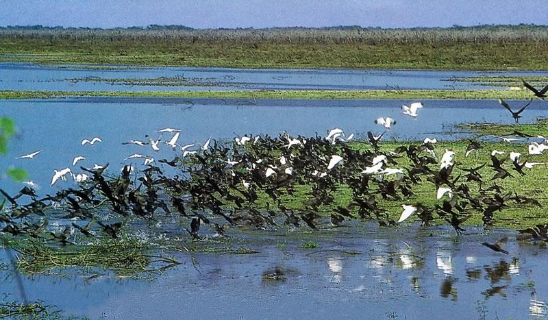 New River, Belize Wetlands