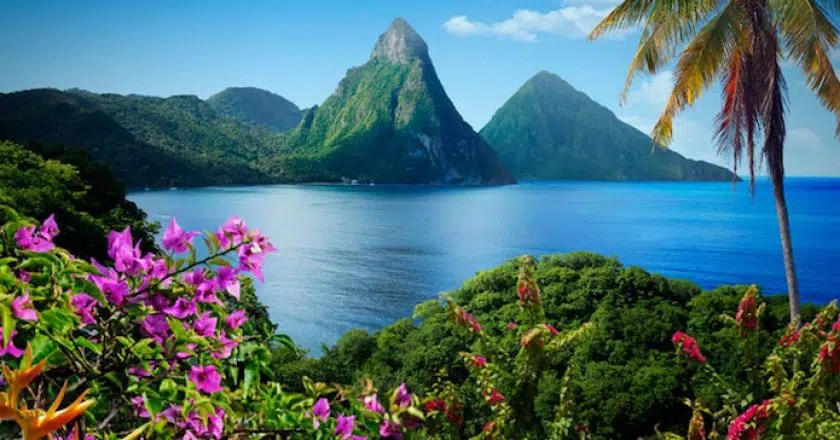 Botanical guides to tropics