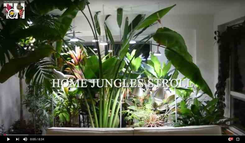 Home jungles stroll