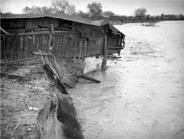 This hog barn is half hanging over the river, ready to collapse after the bank washed away below it. This could be either the San Gabriel River or the Río Hondo, both of which flooded in 1938 | Courtesy of the Los Angeles Public Library