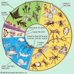 Video: Natural Selection and Climate Change